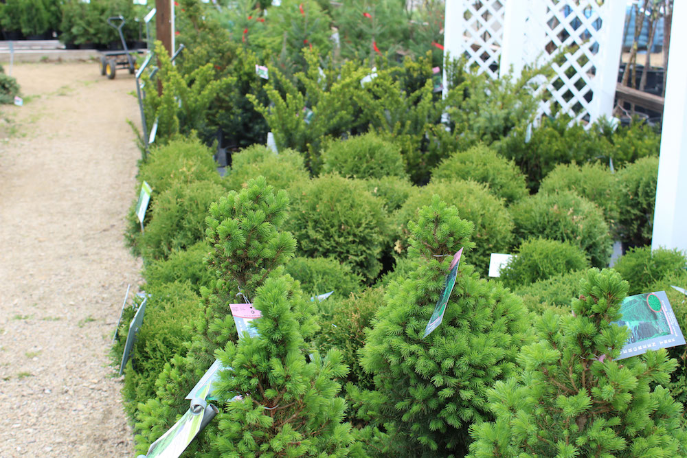 variety of shrubs for landscaping ideas